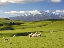 landerinfo-neuseeland-wohnmobil-ferien